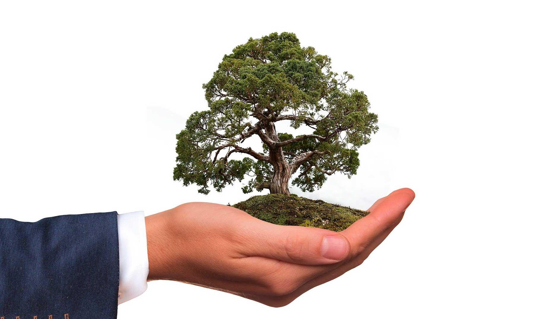 empresa eco-friendly